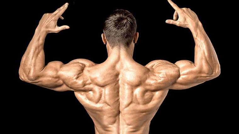 Gym delt exercises: the best choice